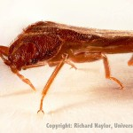 learn about bed bugs