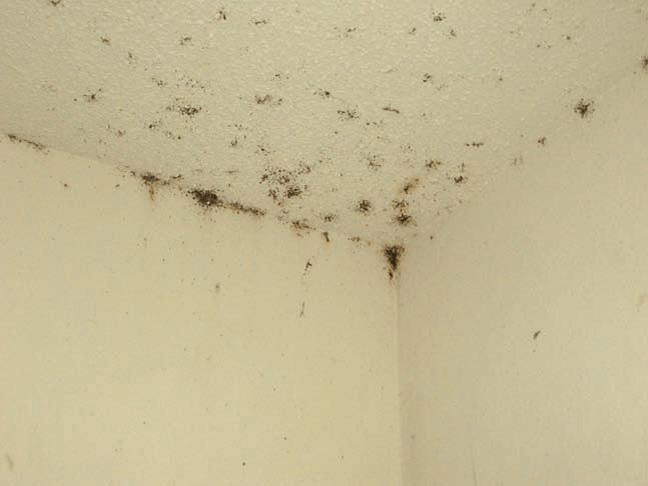Bed Bug Infestation in popcorn ceiling