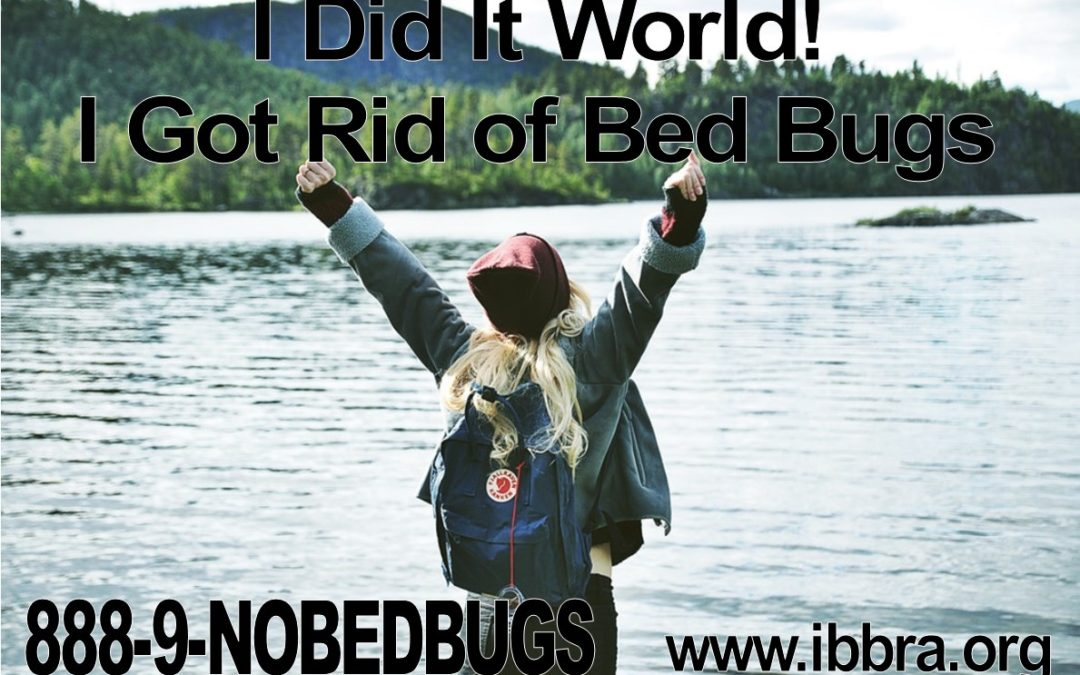 Are you a Hero or a Victim of Bed Bugs?