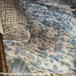 Bed Bug Blood Bath