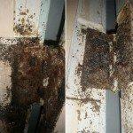 market-st-bedbugs2