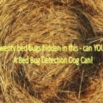 proactive bed bug inspections