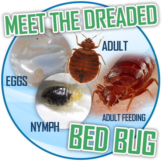 DIY bed bug solutions