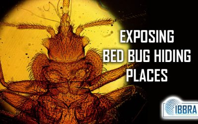 EXPOSING BED BUG HIDING PLACES