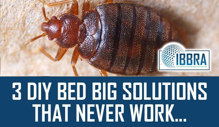 3 DIY Bed Big Solutions that Never Work, And Why…